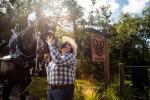 New Home For Disney Horses