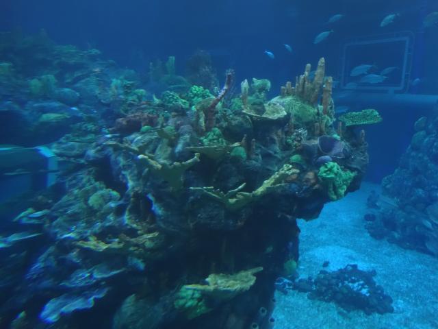 Coral Reef @ Seas