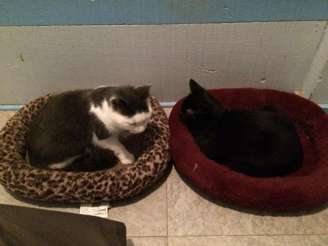 kittens1dec2015.jpeg