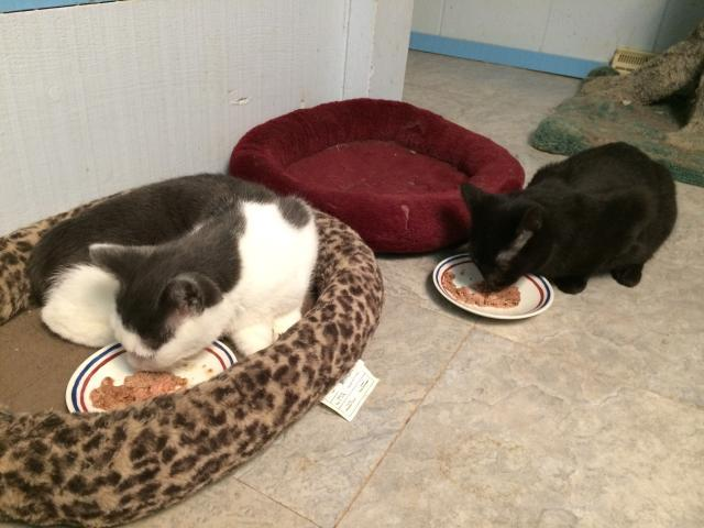 kittens22015.jpeg