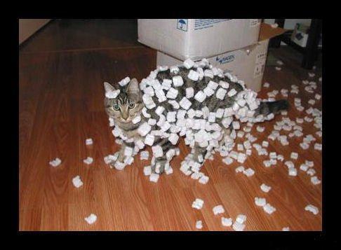 static_cat.jpg