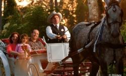 Carriage Rides at Disney World