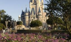 Disney Parks Moms Panel Search Begins September 2
