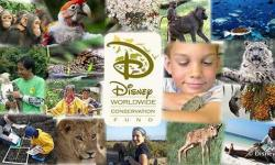 Disney's Animal Kingdom and the Disney Conservation Fund