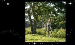 Disney Research Using Video to Detect Behavior of Giraffes at Night