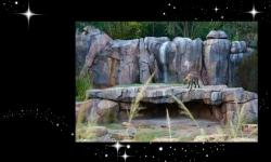 Disney's Animal Kingdom Welcomes Hyenas to the Kilimanjaro Safaris Savanna