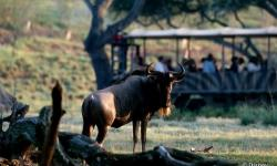 Three Fantastic African Safaris at Walt Disney World Resort
