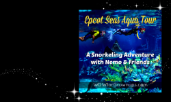 Snorkeling With Nemo & Friends At The Epcot Seas Aqua Tour