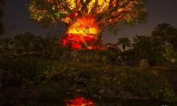 New Experiences Debut this Summer at the Walt Disney World Resort